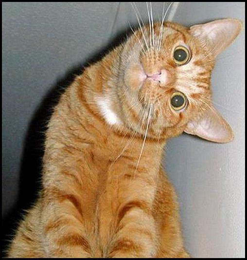 funny-cat.jpg