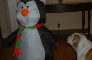 Wonderbutt ferociously warns Penobscott Penguin that his presence is not welcome in the Firepants household.