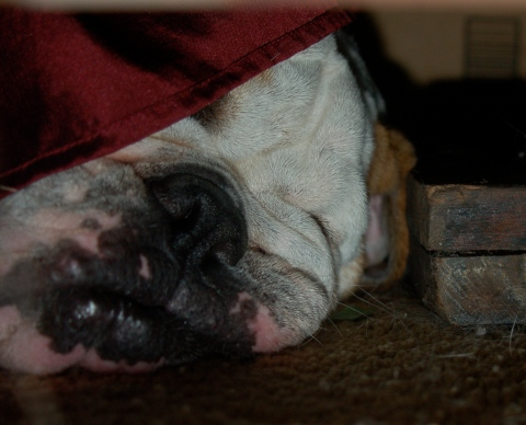 Wonderbutt Sleeping
