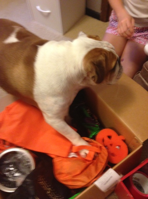 Wonderbutt decides that the selection process is much easier if he gets in the box himself.