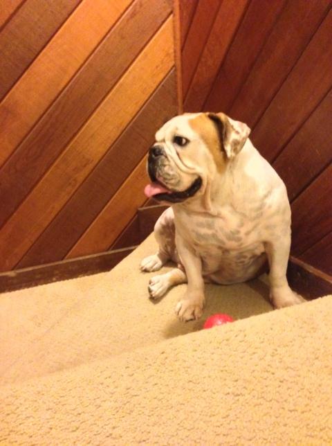 Our vicious guard dog - Wonderbutt