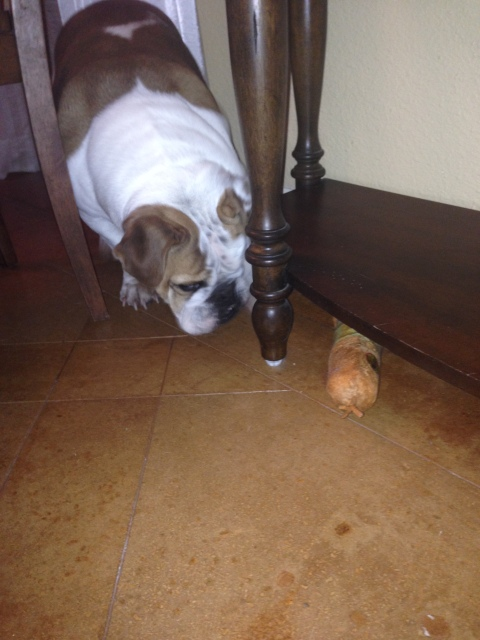 Wonderbutt tries to figure out how to rescue Squeaky Toy